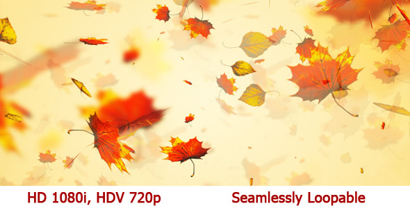 Autumn Leaves Season Broadcast Background