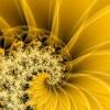 starsunflower