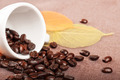 Coffe Cup and Leaves - PhotoDune Item for Sale