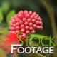 Flowers 1 FullHD Stock Footage H264 - VideoHive Item for Sale