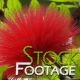 Flowers 2 FullHD Stock Footage H264 - VideoHive Item for Sale