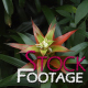 Flowers 4 FullHD Stock Footage H264 - VideoHive Item for Sale