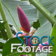 Flowers 8 FullHD Stock Footage H264 - VideoHive Item for Sale