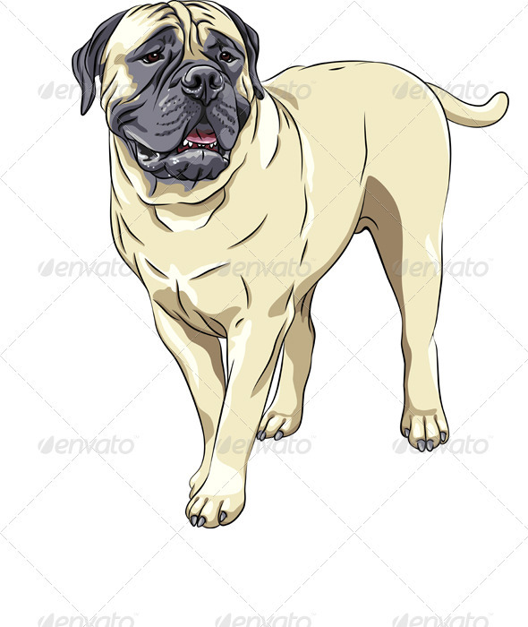 Domestic Dog Breed Bullmastiff stands - Animals Characters