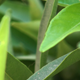 Green Leaves - Close Up - VideoHive Item for Sale