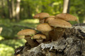 edible mushrooms in the forest - PhotoDune Item for Sale