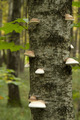 mushrooms on tree - PhotoDune Item for Sale