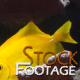 """""""Fishes 13"""" Stock Footage in Full HD 1920x1080"""
