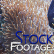 """""""Fishes 19"""" Stock Footage in Full HD 1920x1080"""
