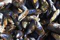 Close Up Of Fresh Mussels On Market Stall - PhotoDune Item for Sale
