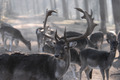 Deer 1 - PhotoDune Item for Sale