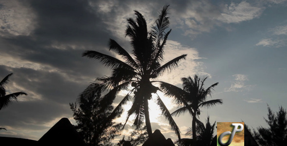 Palm Tree Silhouette in Mexico Full HD