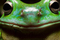 Smiley tree frog - PhotoDune Item for Sale