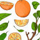 Fresh Oranges and Leaves Set - GraphicRiver Item for Sale