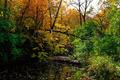 Fall Autumn Colors Creek Landscape - PhotoDune Item for Sale