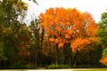 Fall Autumn Colors Landscape - PhotoDune Item for Sale