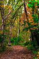Fall Autumn Path in Wooded  Forest Park Landscape - PhotoDune Item for Sale