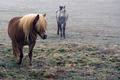 Vintage horse - PhotoDune Item for Sale