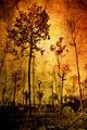 Vintage trees - PhotoDune Item for Sale