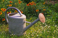 water can in a garden - PhotoDune Item for Sale