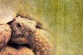old tortoise - PhotoDune Item for Sale