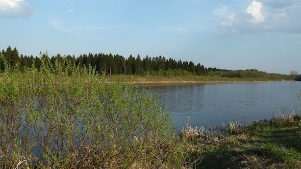 Coniferous Forest And River At Spring Russia 3
