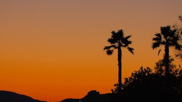 Tropical Sunset Background with Palm Trees 2