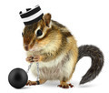 Funny criminal chipmunk in prison hat - PhotoDune Item for Sale