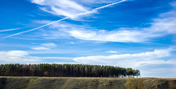 Pine Woods And Clouds In Blue Sky Timelapse
