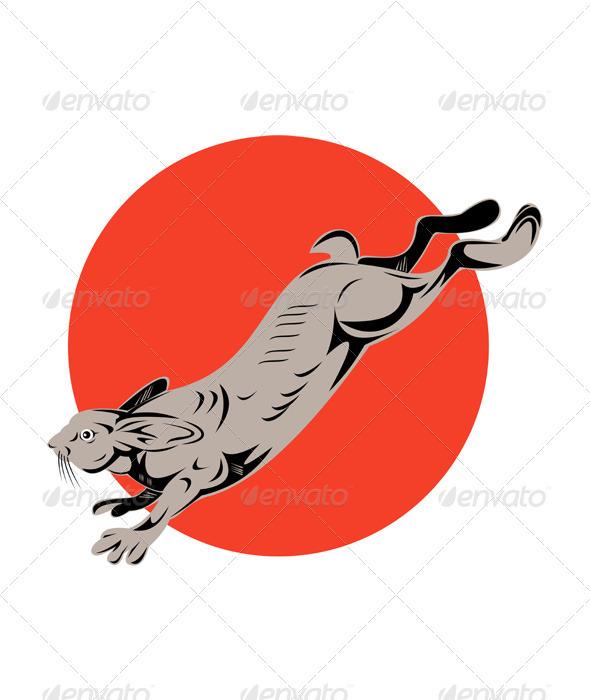 Jack Rabbit Jumping