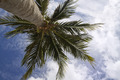 A Palm Tree - PhotoDune Item for Sale