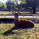 Mighty Stag - PhotoDune Item for Sale