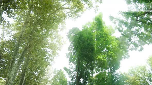 Download Sunshine Forest nulled download