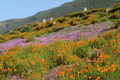 wildflowers along coast - PhotoDune Item for Sale