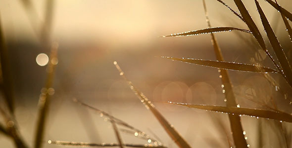 Morning Dew On Grass And Sun Glare