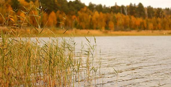 Yellow Grass And Lake 2