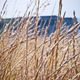 Wheat fields - PhotoDune Item for Sale