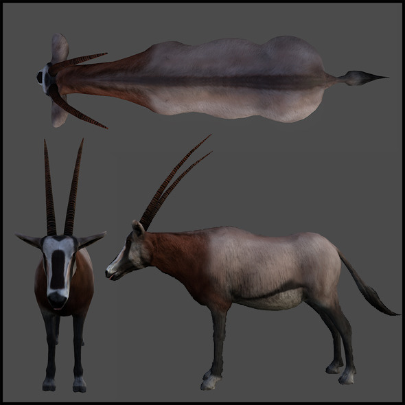 Oryx - 3DOcean Item for Sale