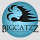 BigcatZZ
