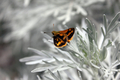 Small Butterfly  - PhotoDune Item for Sale