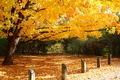Fall - PhotoDune Item for Sale