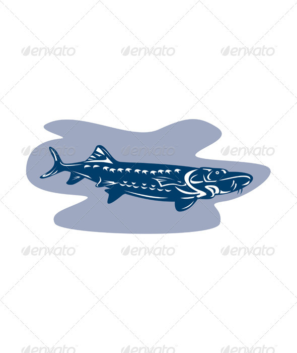 Sturgeon Fish Retro