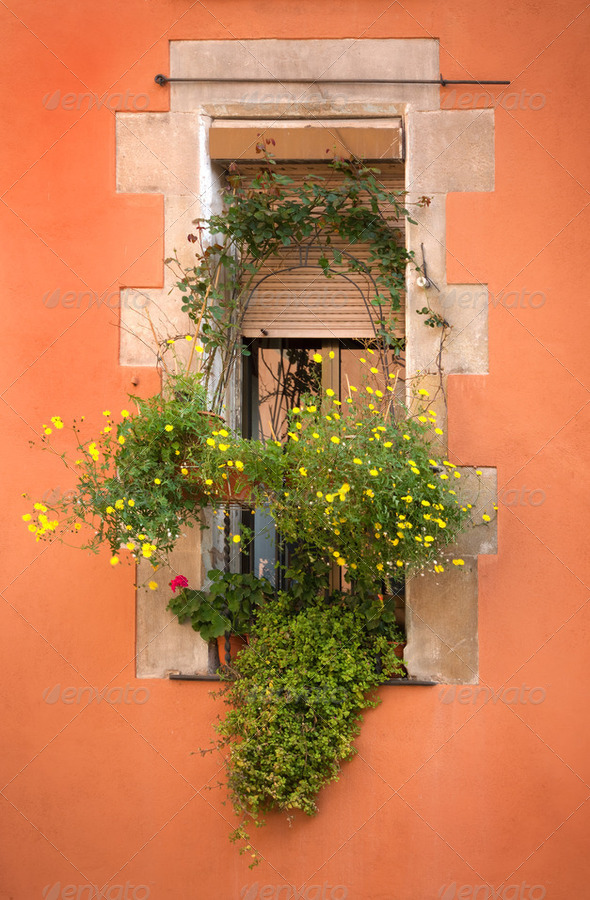 Window with flowers - Stock Photo - Images