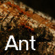Ant - VideoHive Item for Sale