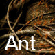 Ant 3 - VideoHive Item for Sale