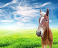 red horse in the field over cloudy blue sky