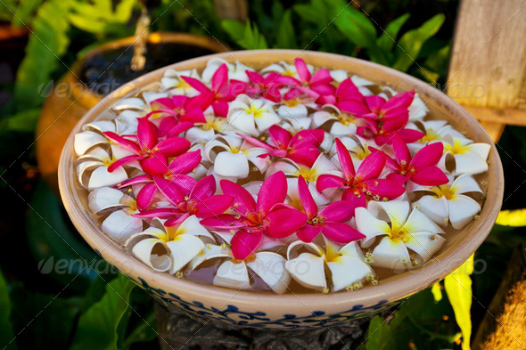 Frangipani flowers in Thailand - Stock Photo - Images