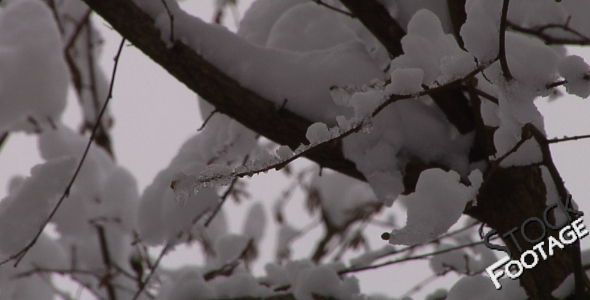 Winter branches FullHD Stock Footage H.264