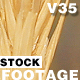 WheatStock 01 - VideoHive Item for Sale