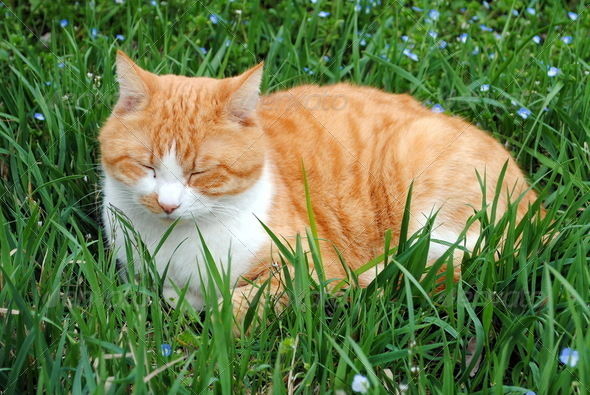 white and orange kitten resting on green grass - Stock Photo - Images